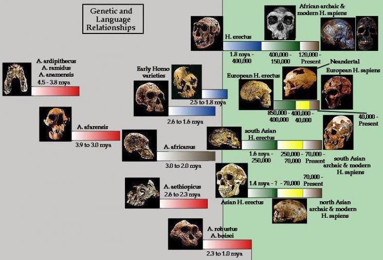 جدول زمانی تکامل بشر