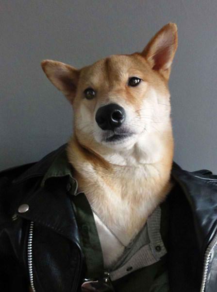 سگی با لباس مردانه (2)