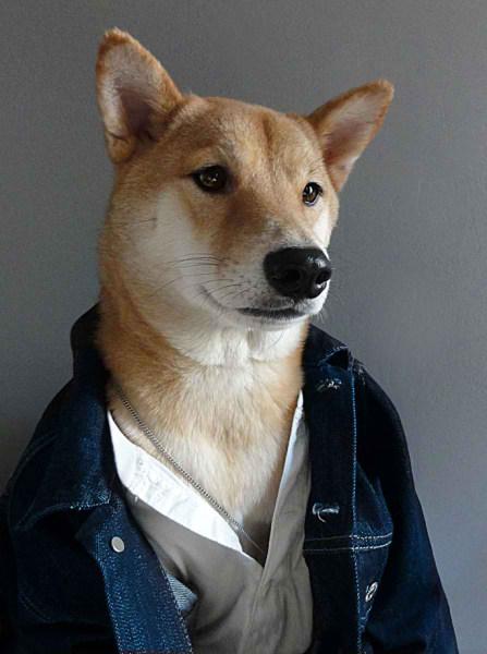 سگی با لباس مردانه (8)