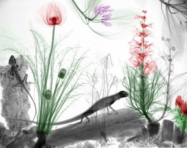 تصاویر فوق العاده از طبیعت با اشعه X  (11)