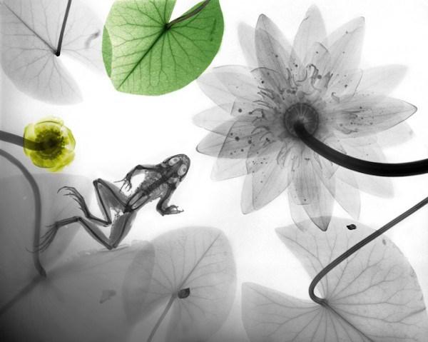 تصاویر فوق العاده از طبیعت با اشعه X  (6)