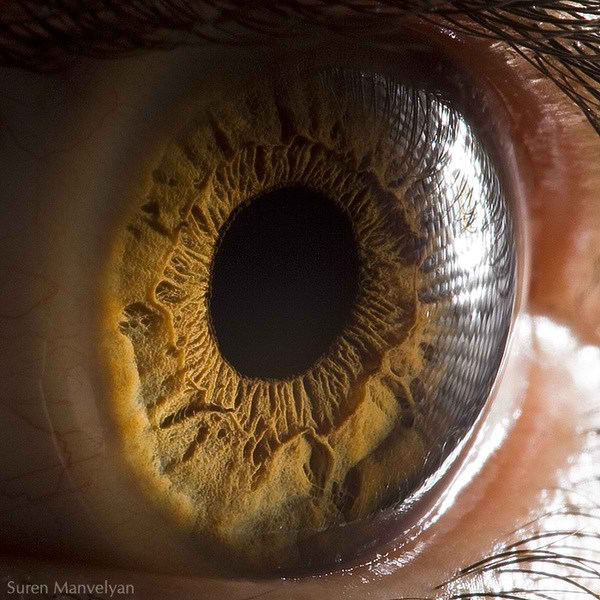 نمای نزدیک چشم انسان (5)