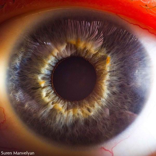 نمای نزدیک چشم انسان (3)