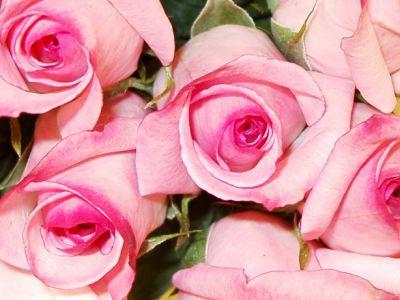 normal_roz-flower_(48)