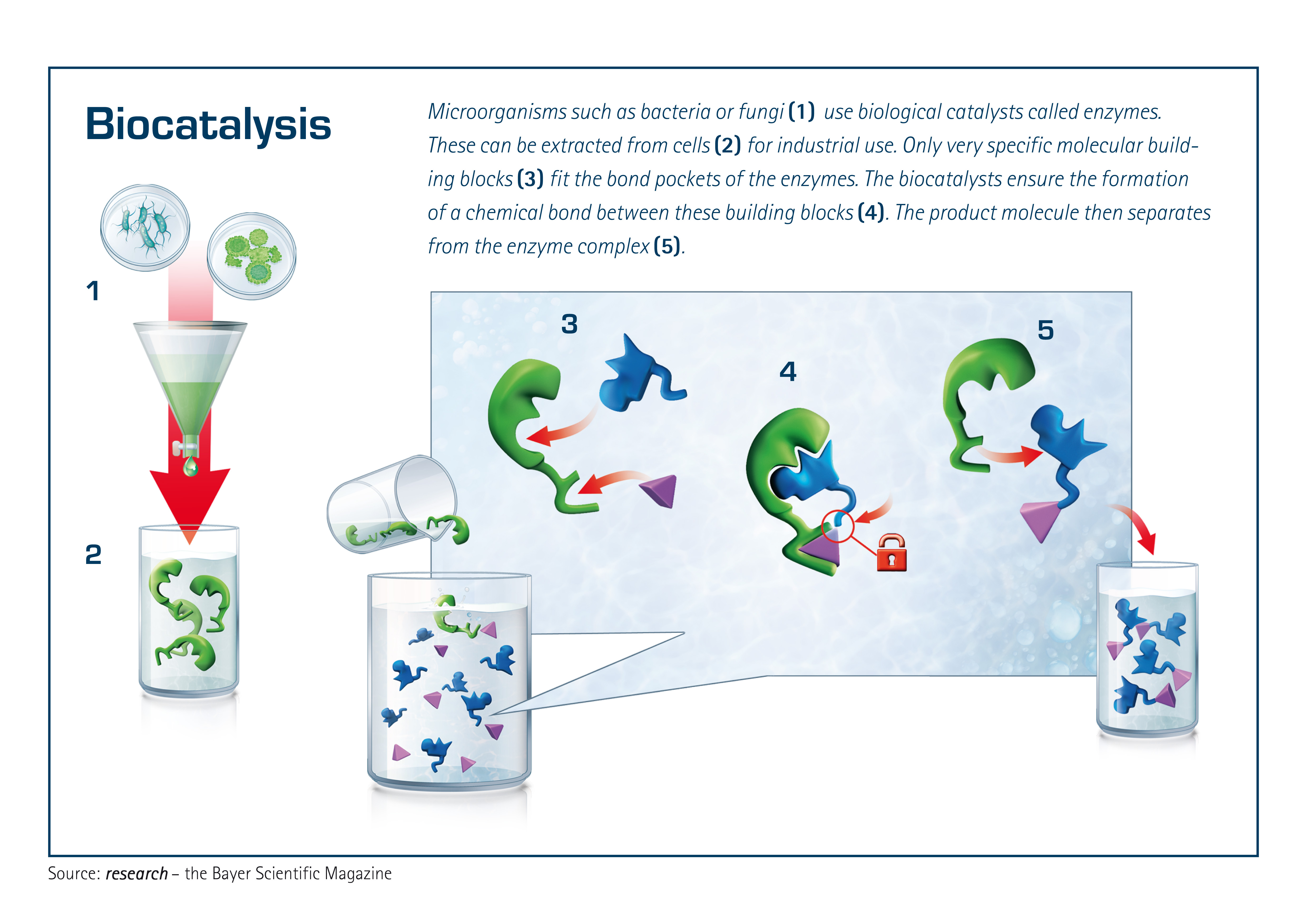 biocatalysis-re24