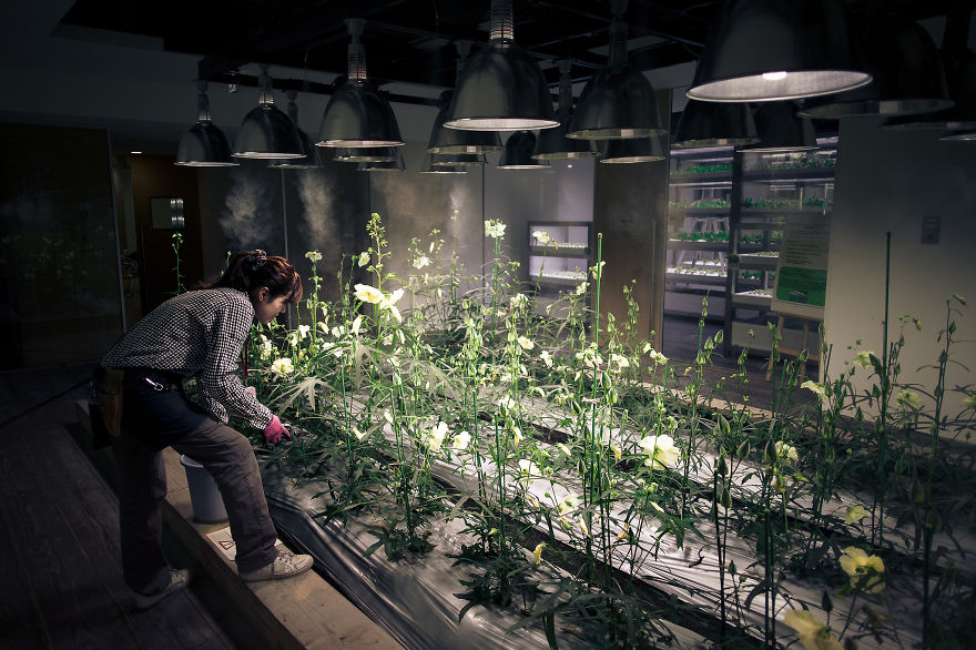 Japan-Secret-Urban-Farming-in-the-heart-of-tokyo2__880