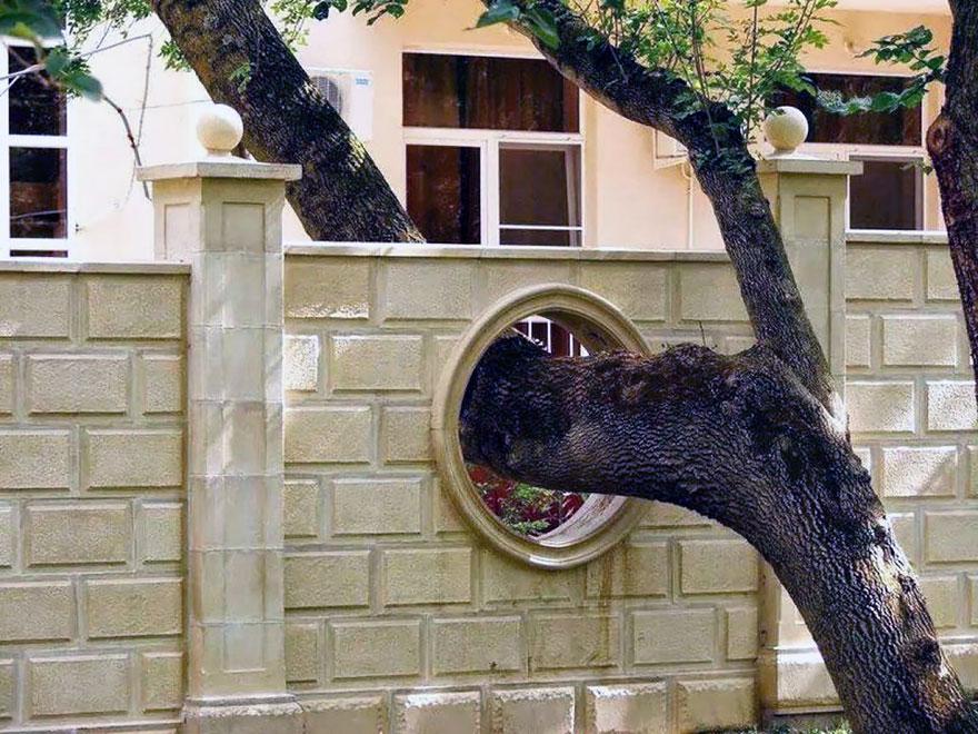 architecture-around-the-trees-5__880