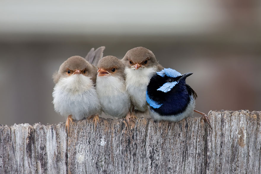 birds-keep-warm-bird-huddles-13__880 (1)