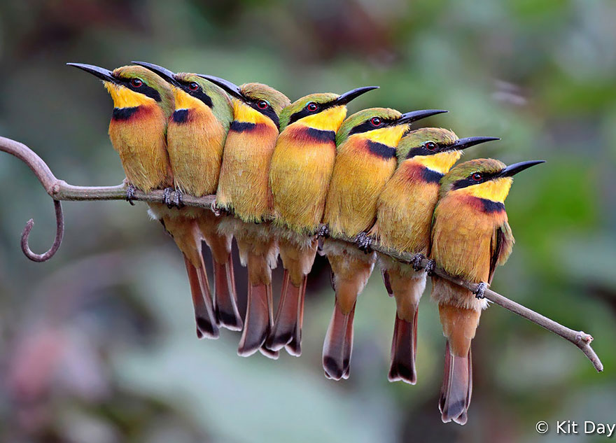 birds-keep-warm-bird-huddles-15__880 (1)
