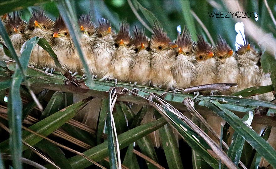 birds-keep-warm-bird-huddles-17__880