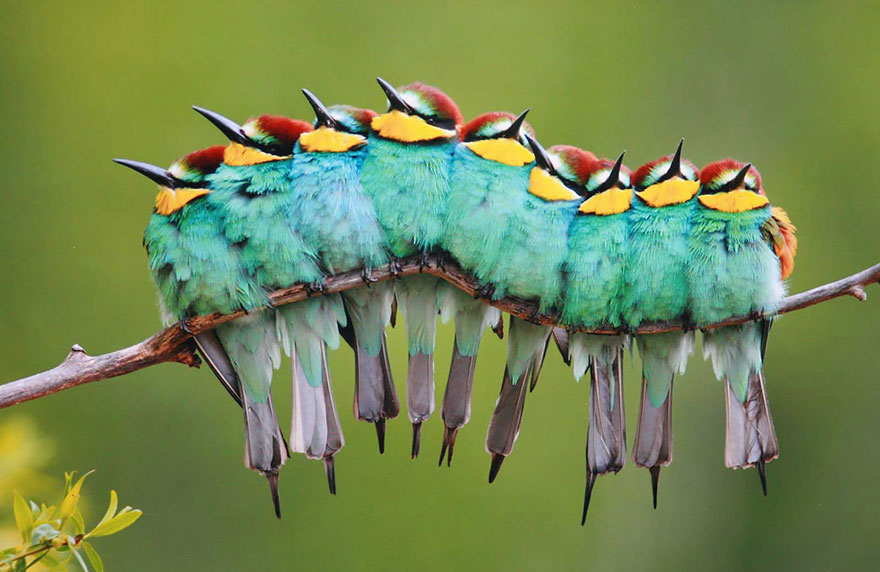 birds-keep-warm-bird-huddles-5__880
