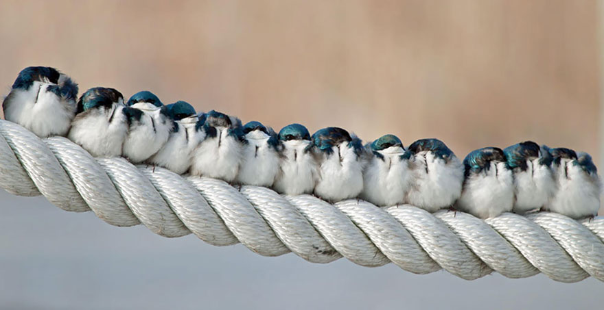 birds-keep-warm-bird-huddles-9__880 (1)