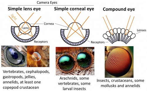 eyecomparisonchart-1024x639