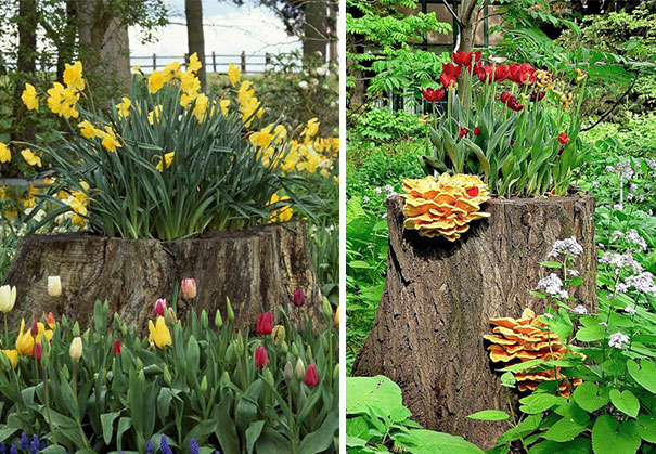 tree-stump-flower-garden-20__605