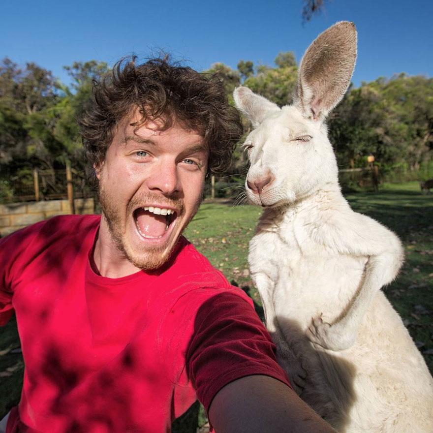 funny-animal-selfies-allan-dixon-11