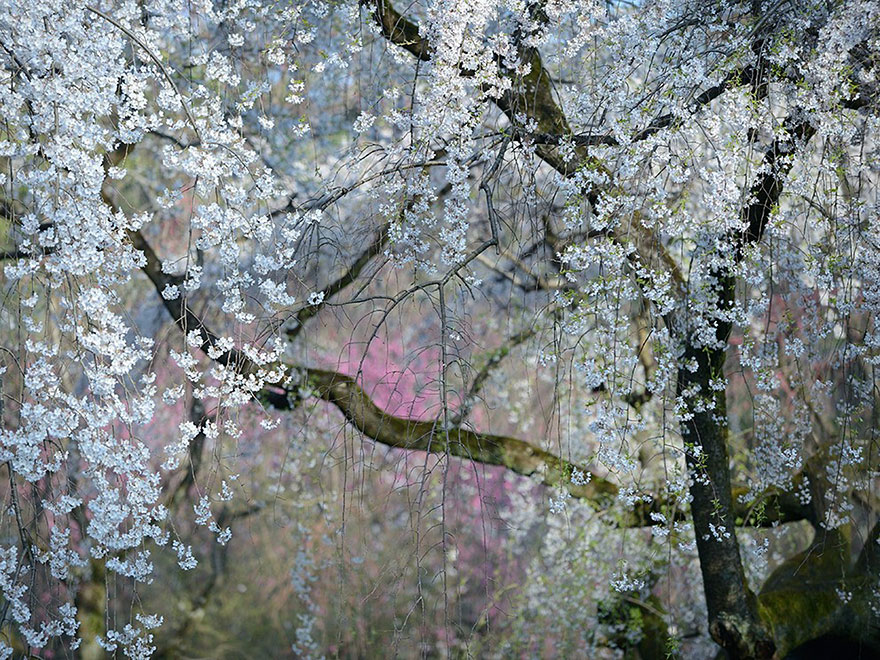 national-geographic-photo-of-the-day-internet-favorites-2015-30__880