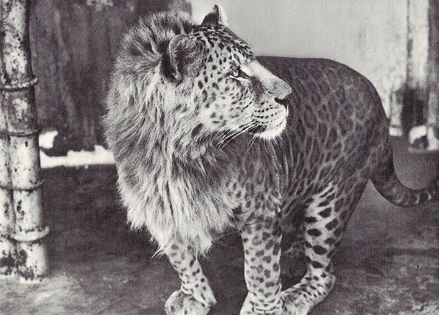 unusual-hybrid-animals-141