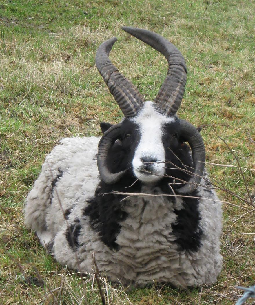 unusual-hybrid-animals-151