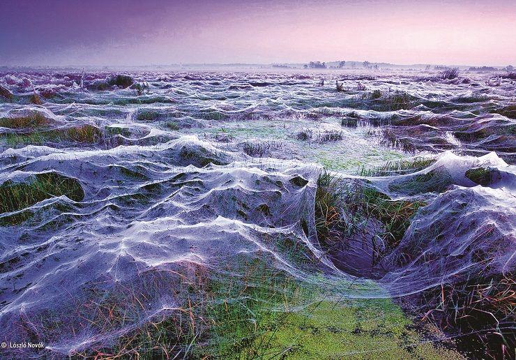 5-ON_spiders_Laszlo-Novak-740x516