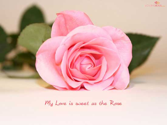 امید، عشق، زیبایی …