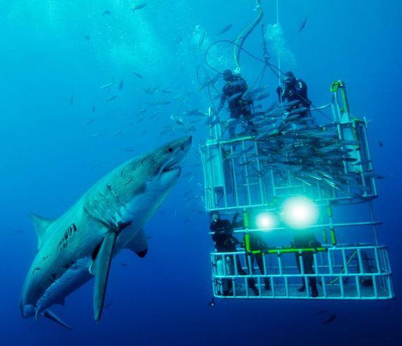 تصاویر فوق العاده از National Geographic 2011 (9)