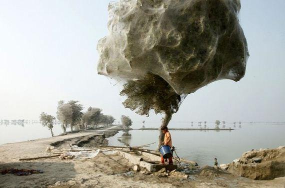 تصاویر فوق العاده از National Geographic 2011 (13)