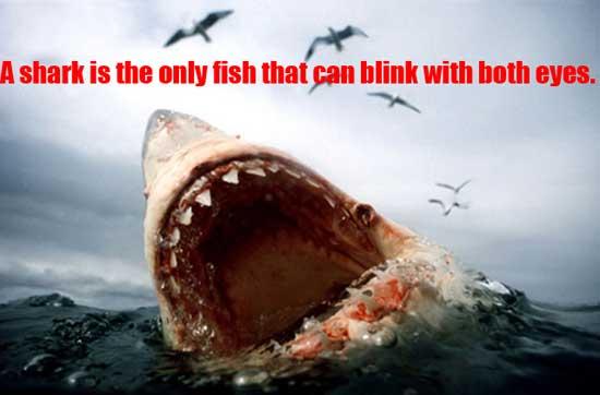 shark-fact
