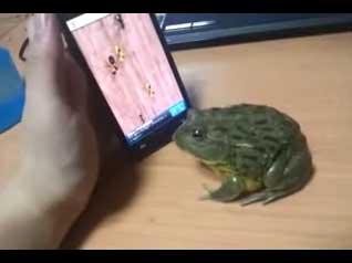 استفاده از قورباغه برای انجام بازی موبایل