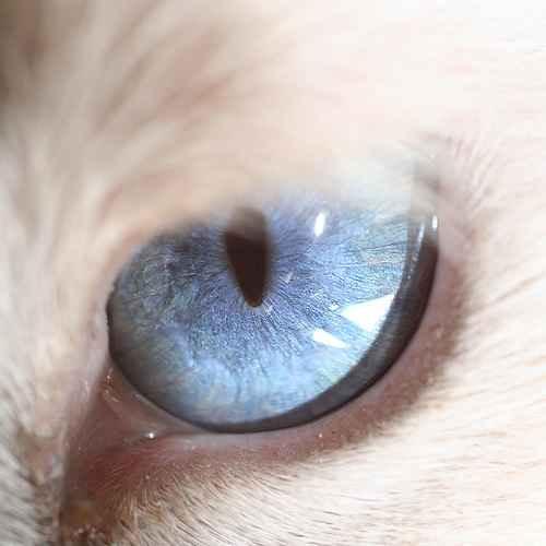 ماکرو تصاویر فوق العاده از چشم (6)
