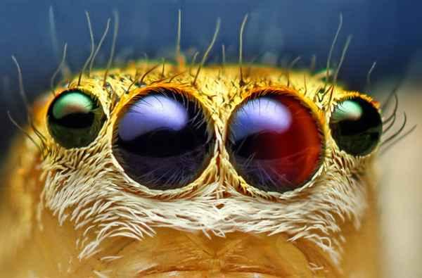 ماکرو تصاویر فوق العاده از چشم (5)
