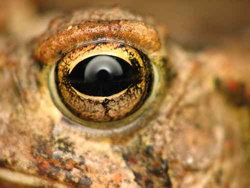 ماکرو تصاویر فوق العاده از چشم (3)