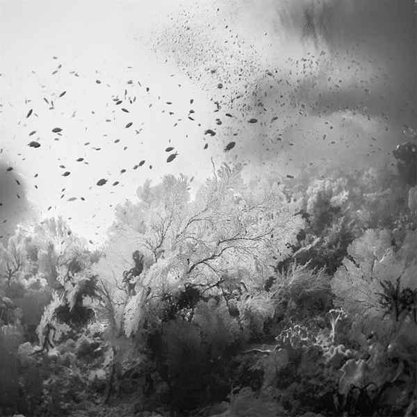 تصاویر سیاه و سفید شگفت آور (2)