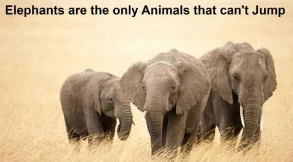 فیل ها تنها حیواناتی هستند که نمی توانند بپرند
