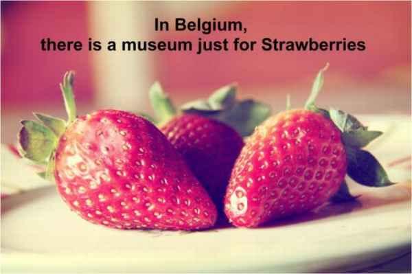 در بلژیک یک موزه فقط برای توت فرنگی وجود دارد