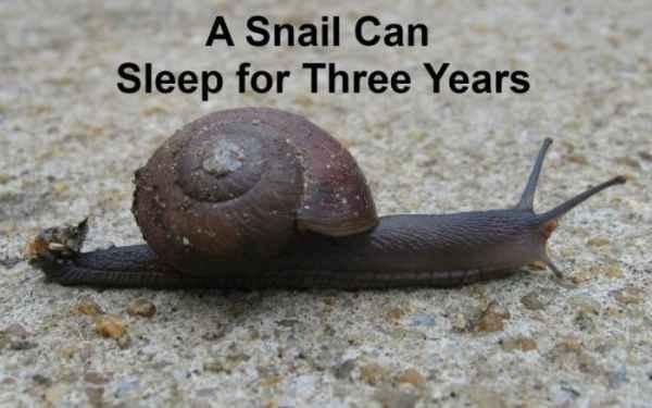 حلزون می تواند تا سه سال بخوابد
