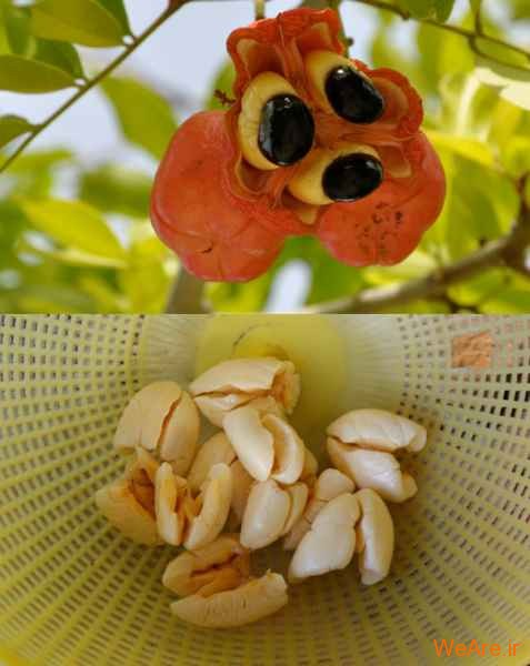 میوه Ackee