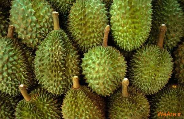 Durian معروف به پادشاه میوه ها
