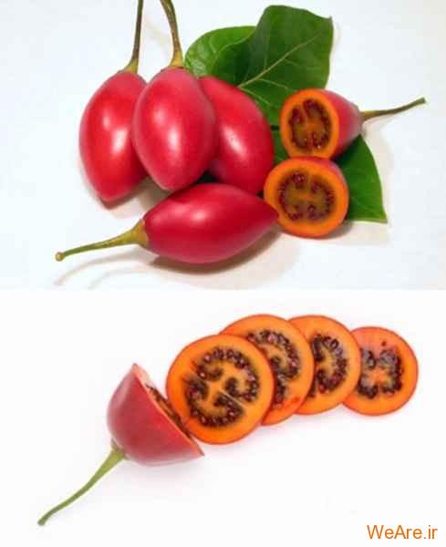 میوه Tamarillo