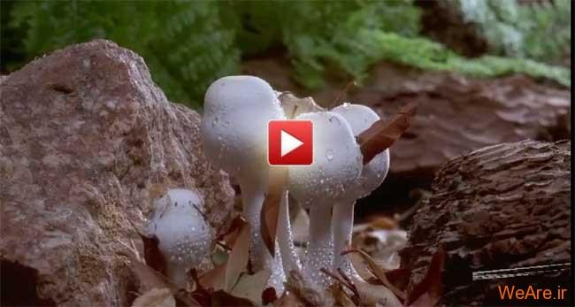 ویدئویی فوق العاده از طبیعت و نحوه رشد درختان و گیاهان