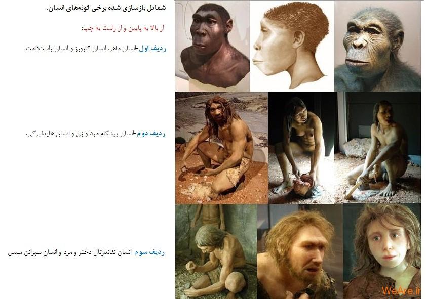 تکامل انسان ها