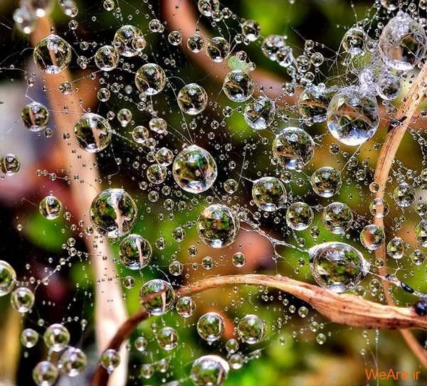 عکس های دیوانه کننده قطرات باران و نور خورشید
