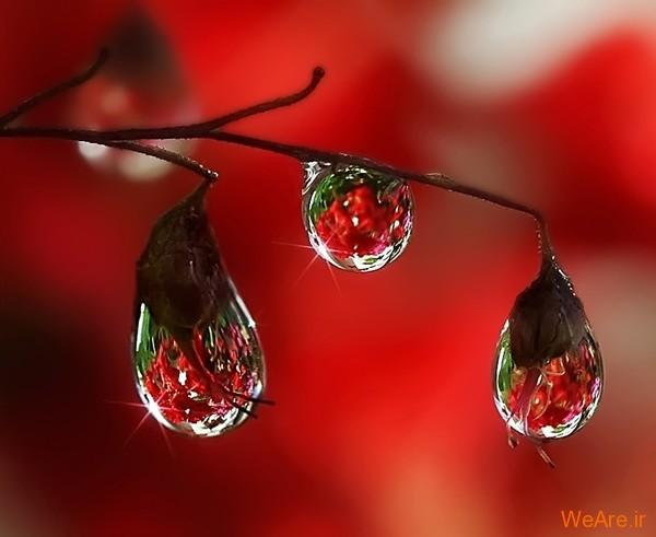 عکس طبیعت,عکس باران (23)