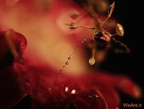 عکس طبیعت,عکس باران (3)