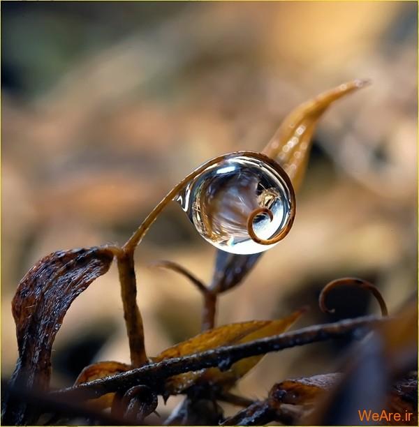 عکس طبیعت,عکس باران (4)