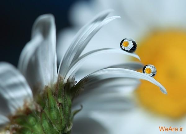 عکس طبیعت,عکس باران (6)