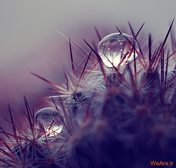 عکس طبیعت,عکس باران (1)