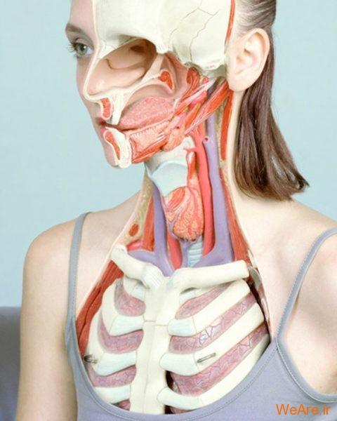 تصاویر پرتره آناتومیک اثر هنرمند هلندی کوئن هاوزر