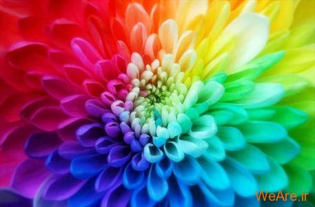 از رنگهای زنانه و مردانه چه میدانید؟