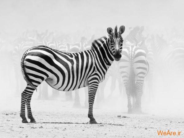 مجموعه تصاویر سیاه و سفید خارق العاده از نشنال جئوگرافیک