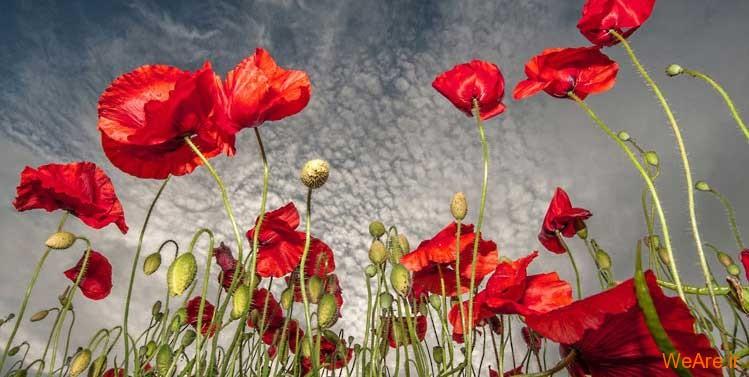 برگزیده زیباترین تصاویر از نگاه عکاس ۲۰۱۲